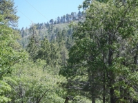 Mountain Oak Campground near Jackson Lake - Wrightwood CA Camping