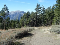 Pacific Crest Trail (PCT) near Blue Ridge Campground with Mt Baden Powell in background - Wrightwood CA Camping