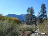 Road to Cabin Flat Campground in Prairie Fork with Mt Baden Powell in background - Wrightwood CA Camping
