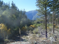 Looking toward Mt Baden Powell from Cabin Flat Campground in Prairie Fork - Wrightwood CA