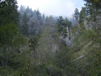 Mist in the Fish Fork area - Wrightwood CA