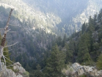 Looking down into Fish Fork - Wrightwood CA