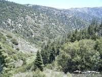 Vincent Gulch as viewed from Bighorn Mine Trail - Wrightwood CA