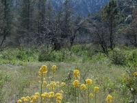 Spring time in Slover Canyon - Wrightwood CA