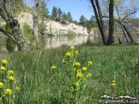 Spring at Jackson Lake - Wrightwood CA