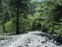 Trail up Acorn Canyon - Wrightwood CA