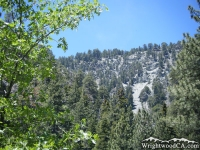 Ridge at the top of Acorn Canyon, as viewed from Acorn Trail - Wrightwood CA