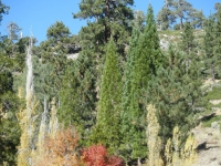 Trees next to Big Pines Visitors Center at the Big Pines Nature Trail head - Wrightwood CA Hiking