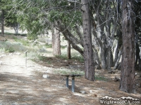 Bench on Big Pines Nature Trail - Wrightwood CA Hiking