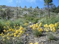 Big Pines Nature Trail - Wrightwood CA Hiking