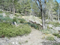 Big Pines Nature Trail - Wrightwood CA Hiking
