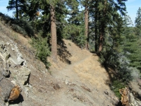 Climbing the hillside on Blue Ridge Trail - Wrightwood CA Hiking