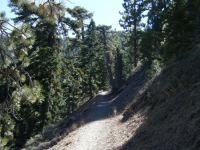 Blue Ridge Trail - Wrightwood CA Hiking