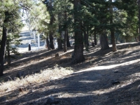 Near the top of the Blue Ridge Trail - Wrightwood CA Hiking