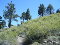 Lightning Ridge Trail - Wrightwood CA Hiking