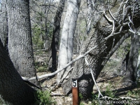 Trail Marker #5 on Lightning Ridge Trail - Wrightwood CA Hiking