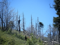 Dead trees on Lightning Ridge Trail - Wrightwood CA Hiking