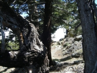 Trail Marker #9 on Lightning Ridge Nature Trail - Wrightwood CA Hiking