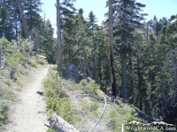 Pacific Crest Trail (PCT) - Wrightwood CA Hiking