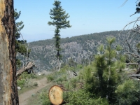 Pacific Crest Trail (PCT) just outside of Jackson Flat Group Campground - Wrightwood CA Hiking