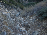 Lamel Springs, just off of the Mt Baden Powell Trail - Wrightwood CA Hiking