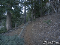 Mt Baden Powell Trail - Wrightwood CA Hiking