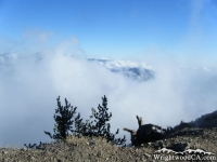 Above the clouds on the Mt Baden Powell Trail - Wrightwood CA Hiking