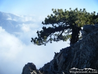 Tree overhanging a cliff on Mt Baden Powell  - Wrightwood CA Hiking