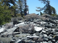 North Backbone Trail - Wrightwood CA Hiking