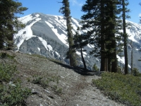 Dawson Peak Trail and Mt Baldy - Wrightwood CA Hiking