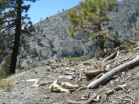 Looking at Pine Mountain Ridge on Dawson Peak Trail - Wrightwood CA Hiking