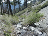 Creek crossing on Dawson Peak Trail - Wrightwood CA Hiking
