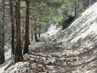 Dawson Peak Trail - Wrightwood CA Hiking
