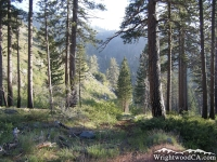Start of Fish Fork Trail through Prairie Fork - Wrightwood CA Hiking