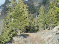 Climbing Pine Mountain Ridge on the Fish Fork Trail - Wrightwood CA Hiking