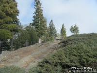 Top of Pine Mountain Ridge on Fish Fork Trail - Wrightwood CA Hiking