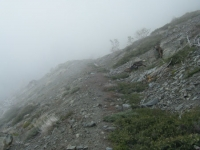 Fish Fork Trail disappearing in the fog - Wrightwood CA Hiking