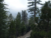 Fish Fork and the Fish Fork Trail - Wrightwood CA Hiking