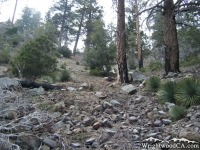 Fish Fork Trail - Wrightwood CA Hiking