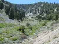 Looking up at Mt Baden Powell on Bighorn Mine Trail - Wrightwood CA Hiking