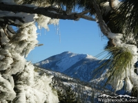 Pine Mountain framed by frozen tree branches at Inspiration Point - Wrightwood CA Mountains