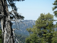 Table Mountain as viewed from the Acorn Trail - Wrightwood CA Mountains