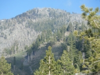 Looking up at Pine Mountain from the Fish Fork/Pine Mountain Ridge Trail. - Wrightwood CA Mountains