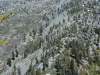 Looking back up at Dawson Peak from the Dawson/Mt Baldy saddle. - Wrightwood CA Mountains