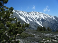 Mt Baldy as viewed from the Dawson Peak Trail in Spring - Wrightwood CA Mountains