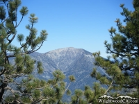 Mt Baden Powell between Pine Trees - Wrightwood CA Mountains