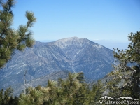 Mount Baden Powell framed with Pine Trees - Wrightwood CA Mountains
