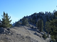 Ridge line near the peak of Mt Baden Powell - Wrightwood CA Mountains