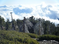 Looking down at trees and clouds from the peak of Mt Baden Powell - Wrightwood CA Mountains
