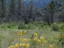 Spring time in Lone Pine Canyon. - Wrightwood CA Photos